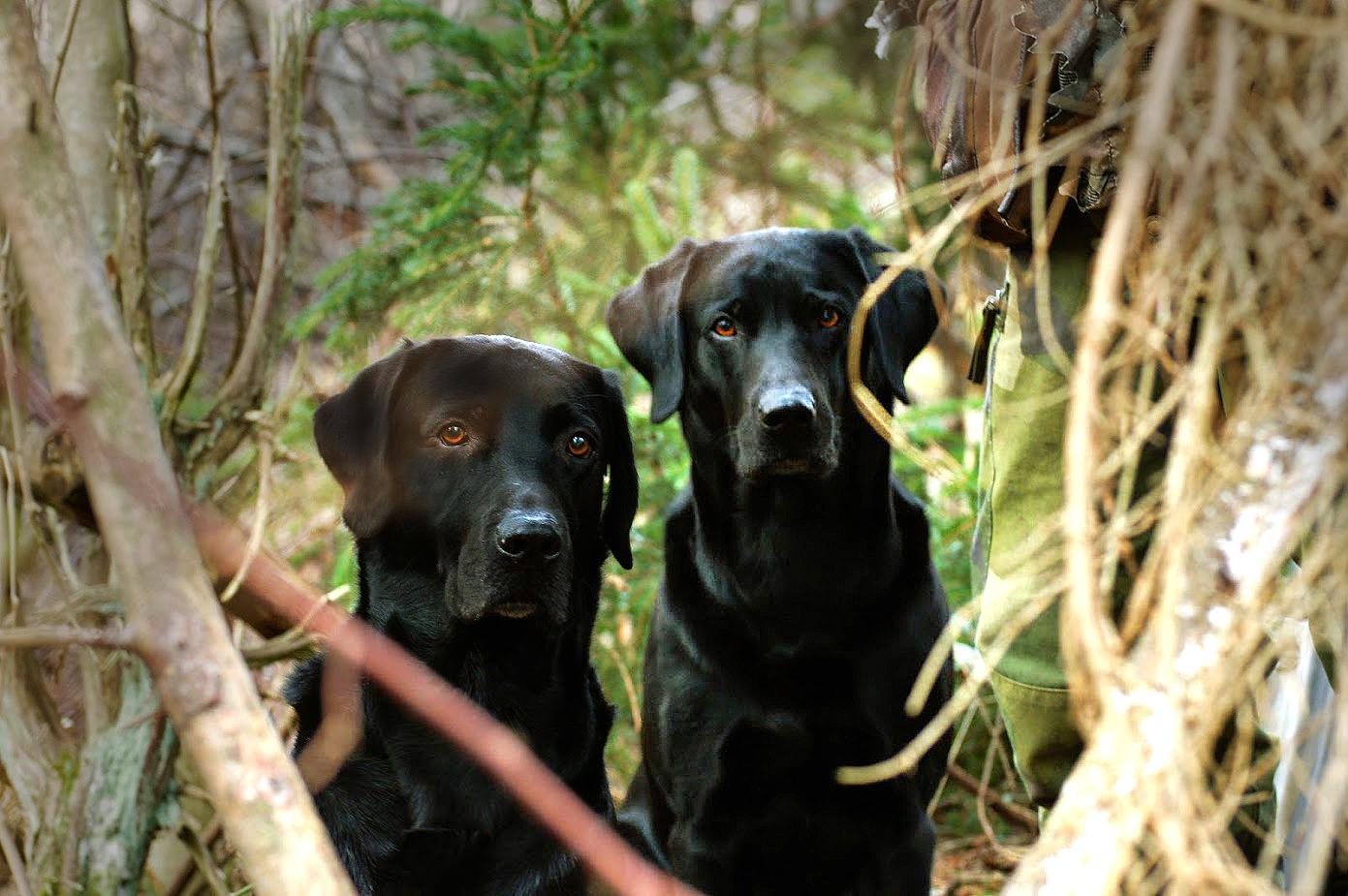Bröderna brothers, Argo och Snaps.